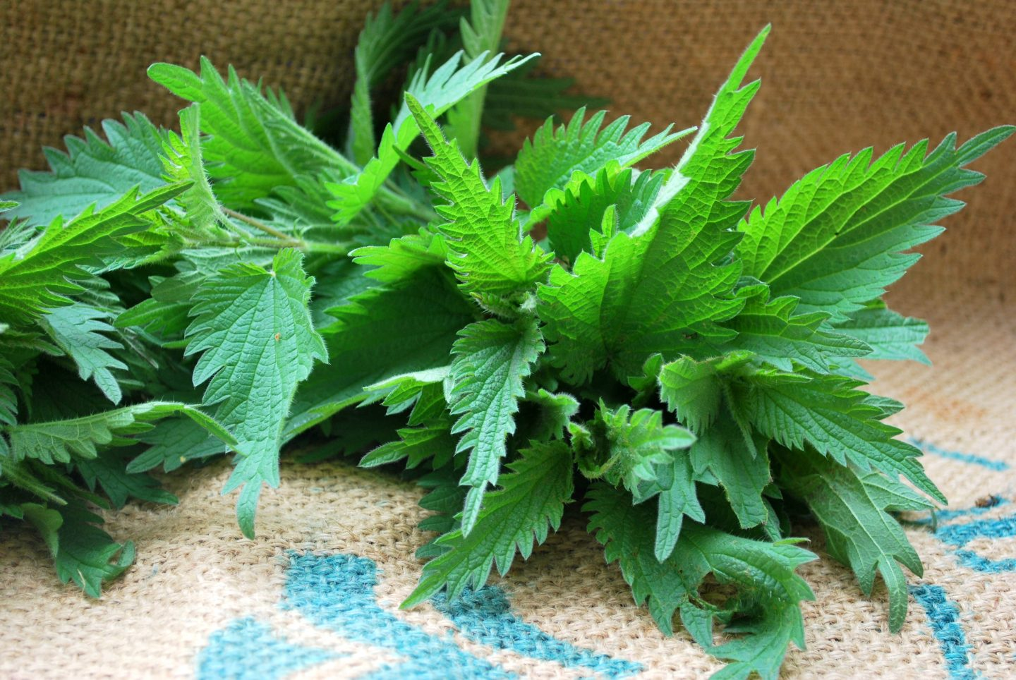 Spring Detox (with Stining Nettles)